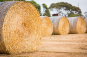 where to buy baling twine?